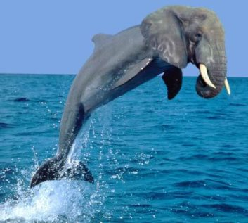elephin